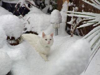 Jell snow 1