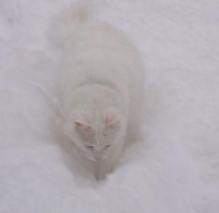 Jell snow 2